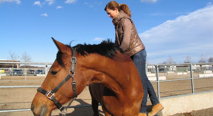 Chiropraktik_bei_Pferden